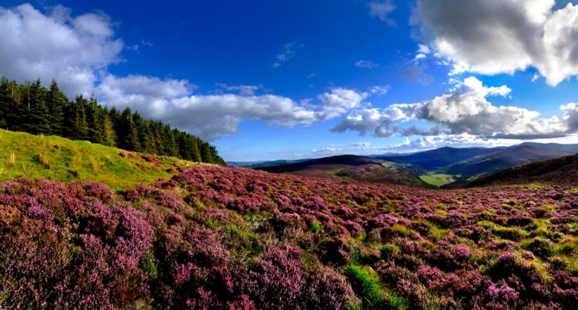 Montagnes du Wicklow